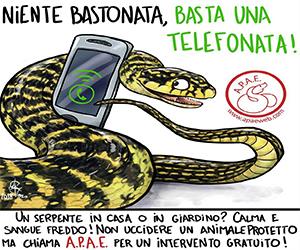 Recupero Serpenti e Rettili Padova