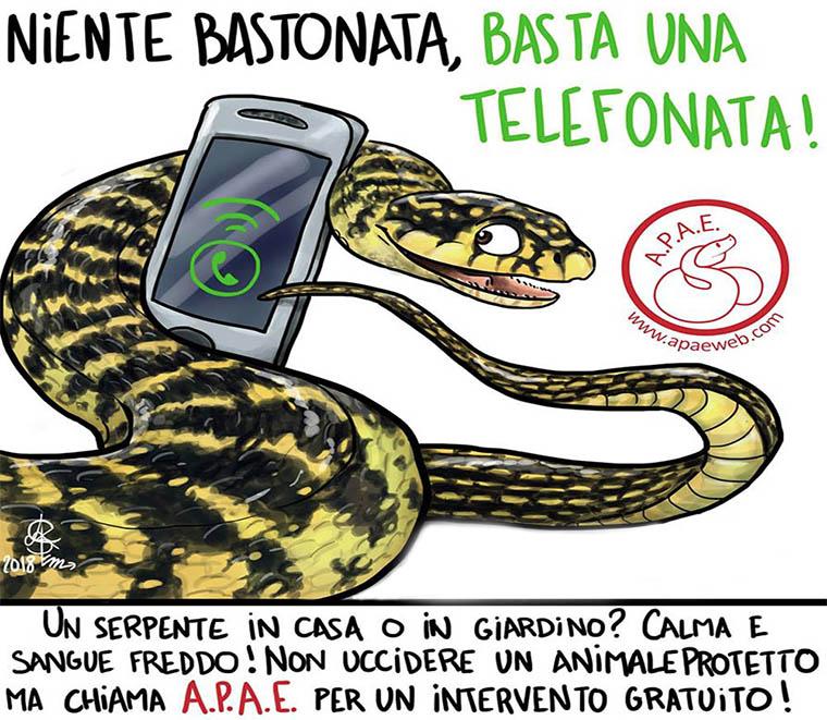 Serpenti Padova: recuperi rettili e adozioni